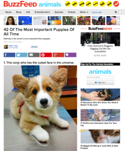BuzzFeed cute animals