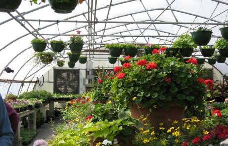 Rose Hill Flower Sale 2015
